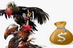 taruhan ayam thailand